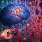 脑血栓的预防